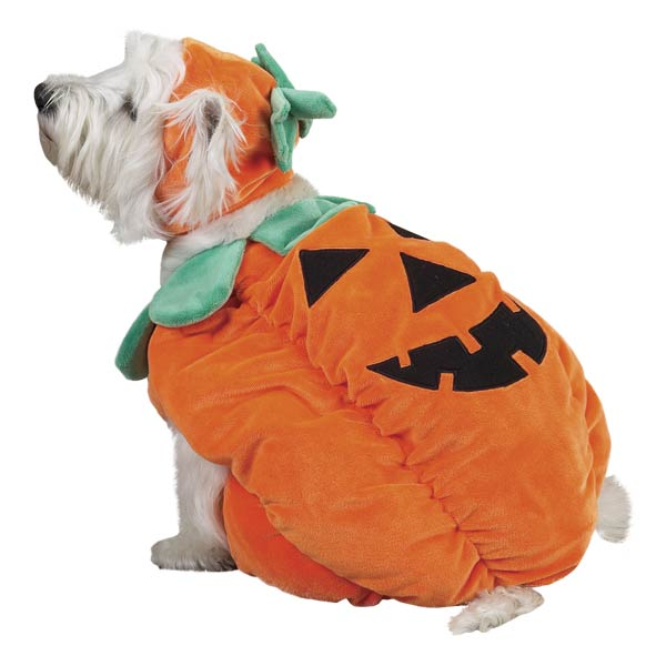 Small dog wearing a pumpkin costume.
