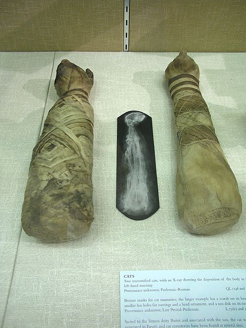 Two mummified cats