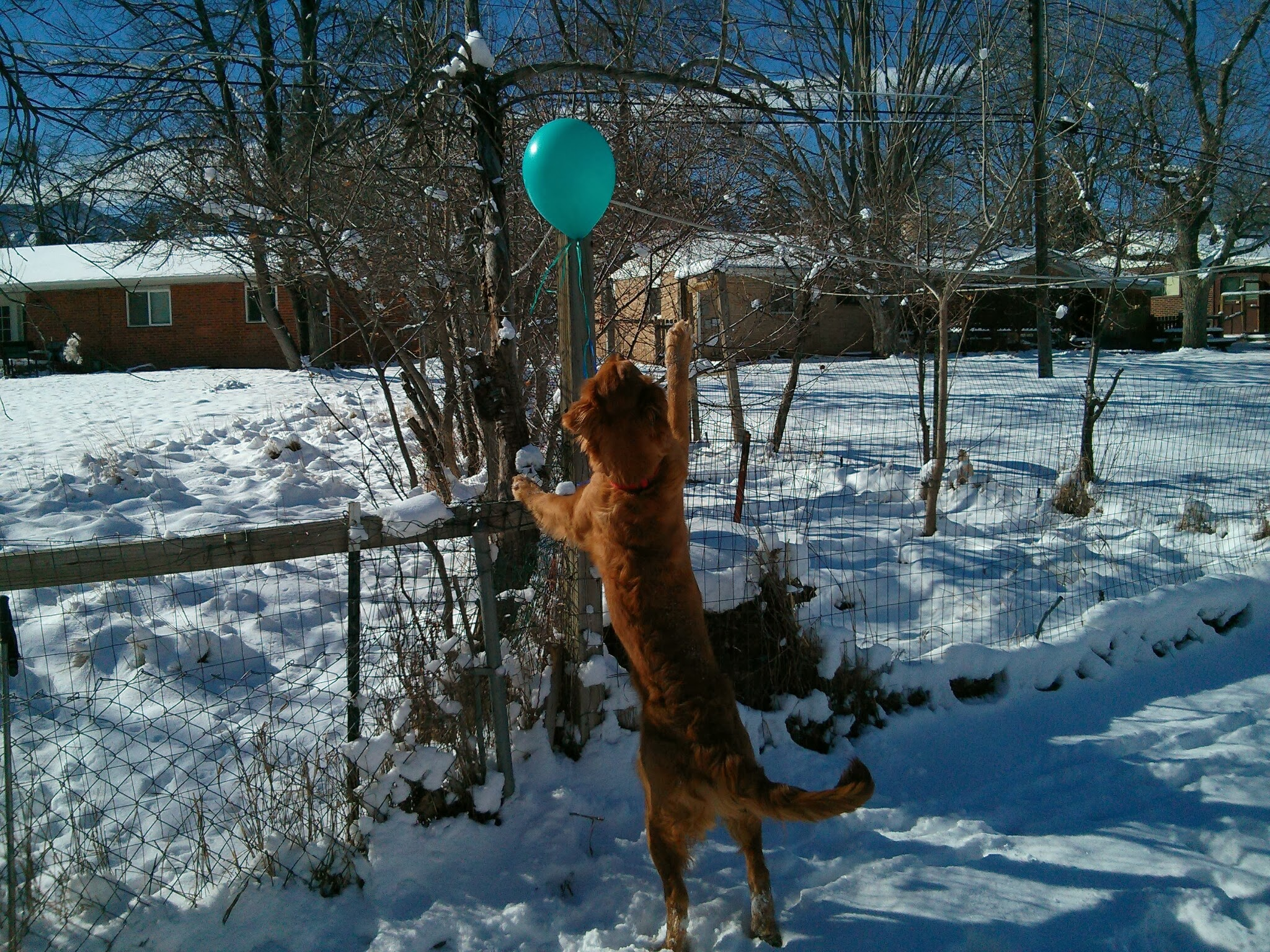 the balloon attempts to cross the fence and Bender hops up to chase it