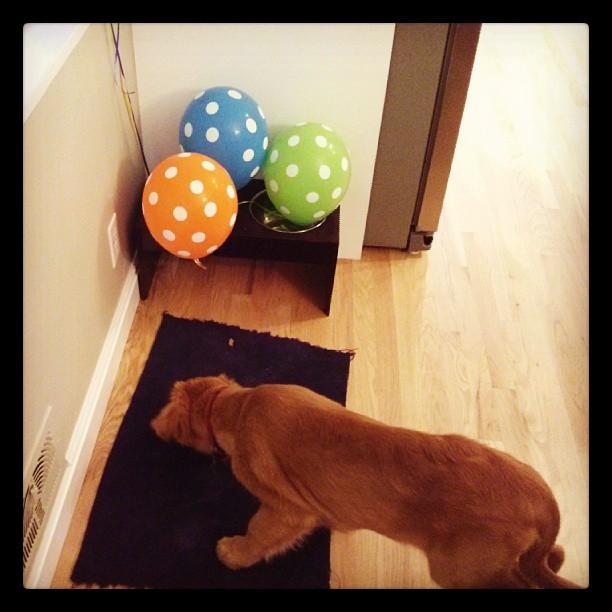 ballons adn bender
