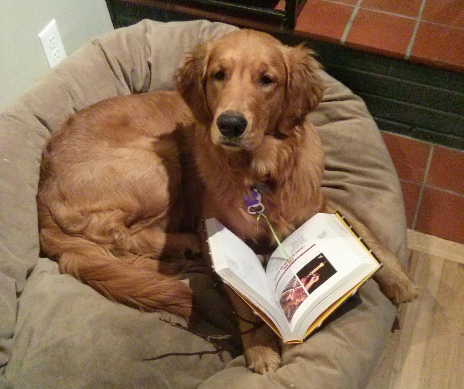 how to catch a dog book